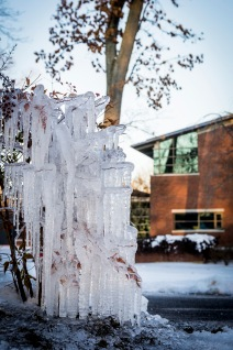 Winter Ice on a bush